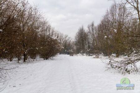 Neve a Tolcinasco