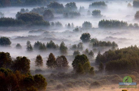 Trees in the morning mist
