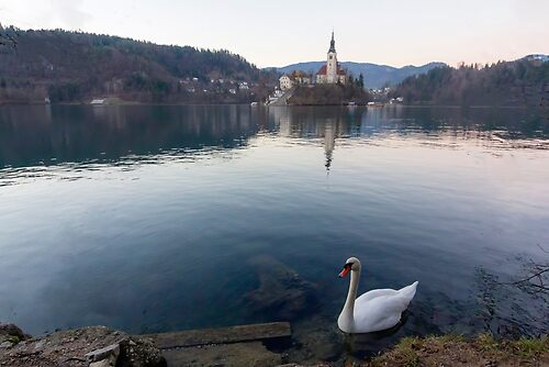 The lake of Bled