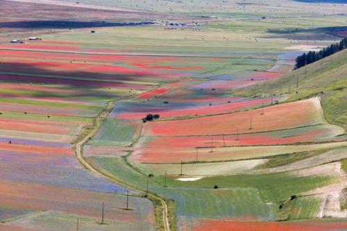 La fioritura di Castelluccio 2018